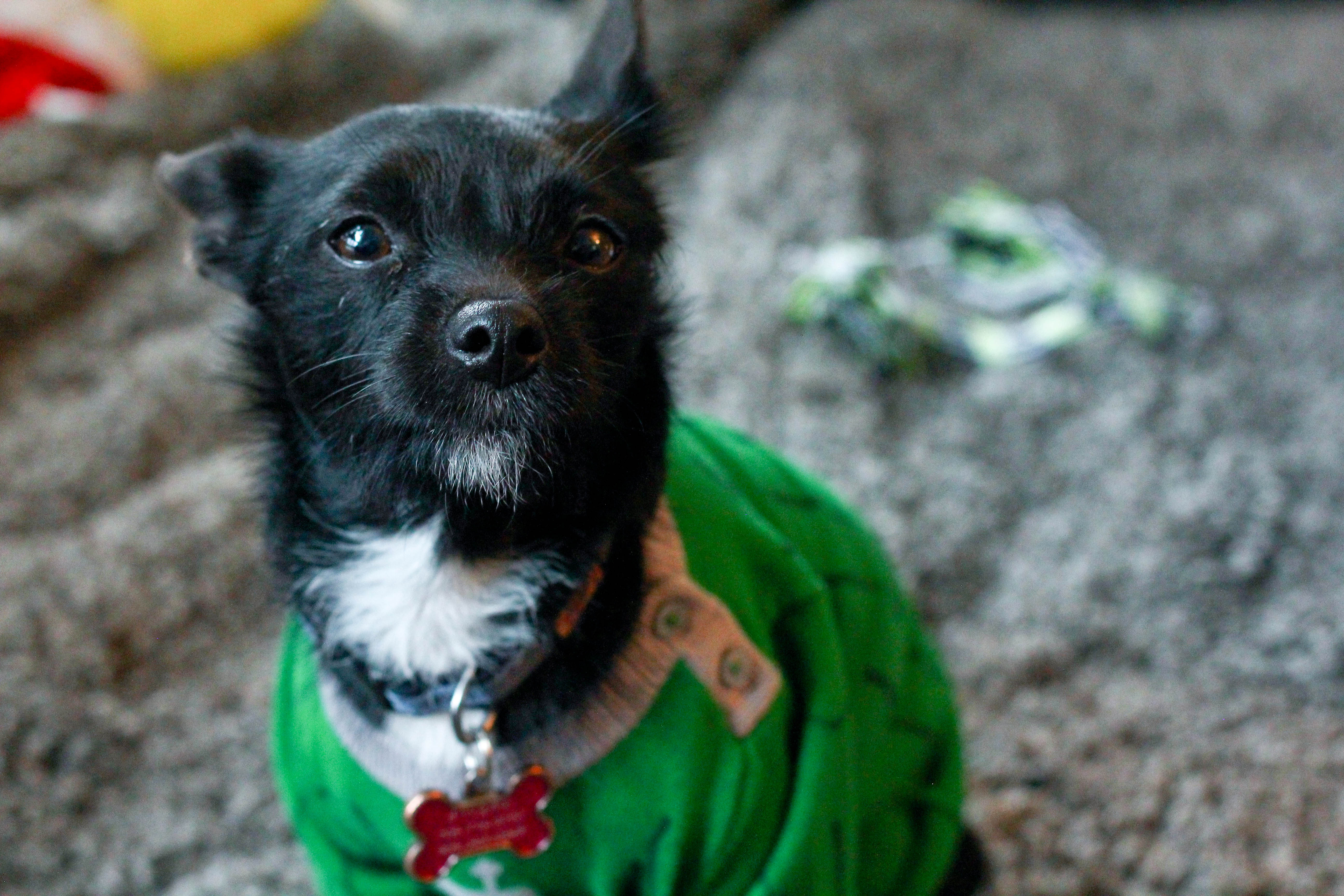 Last Minute DIY Dog Costume From A Baby esie – Pickle Rick